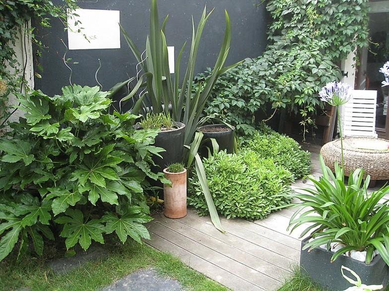 végétaux recouvrant la terrasse