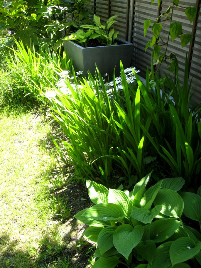 début de végétation