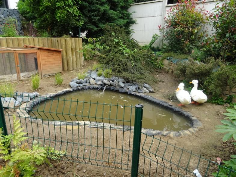 Bassin à canards